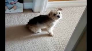 Funny Little Fellas Doing Funny Things 5