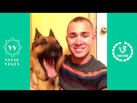 Best Funny and Cute Dog Vines Compilation November 2016