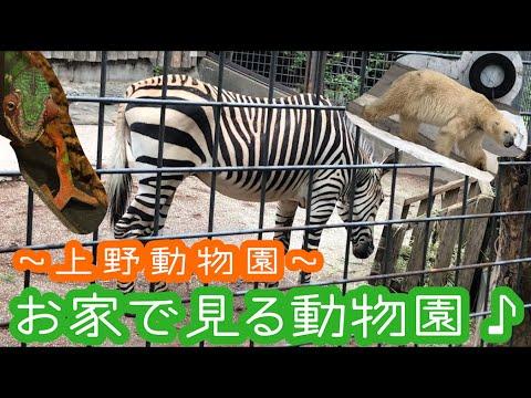 【上野動物園】お家で見る動物園!生き物を見て癒されよう♪