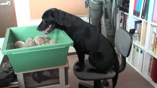 犬に見守られる2