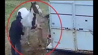 Bijesni Pitbull napao konja, pa SKUPO PLATIO CIJENU! (VIDEO)