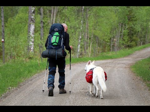 Eric & his dog Ice walking St. Olavsleden