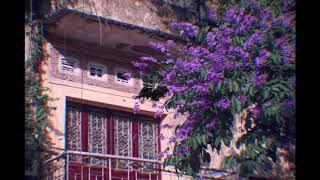 Hoa Bằng Lăng - Tam Kê Mix