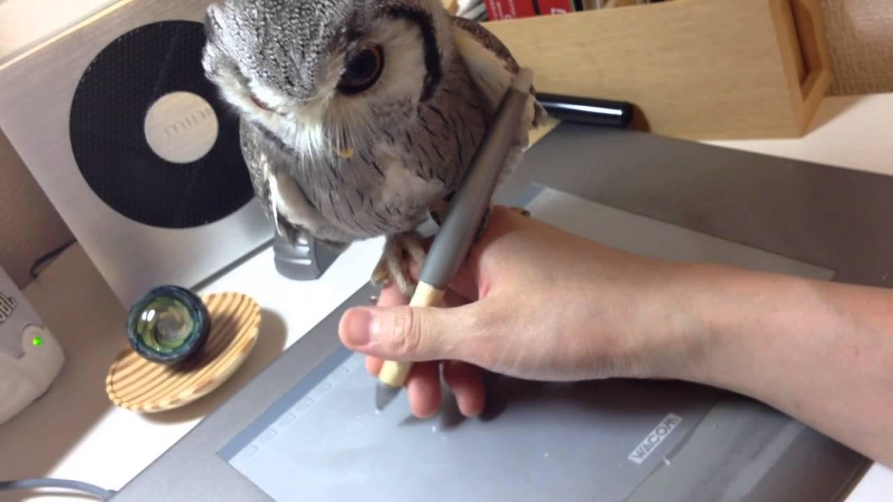 Un illustrateur dessine avec un hibou posé sur la main