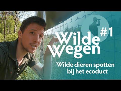 Wilde dieren spotten bij het ecoduct | Wilde Wegen #1