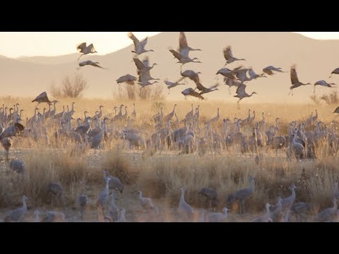 Migrating with the Sandhill Cranes