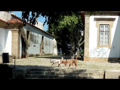 Castelo Branco 2010
