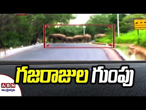 Herd of elephants spotted in Tirumala Ghat road