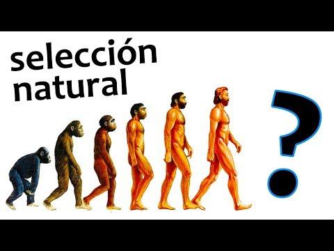 El ser humano sigue evolucionando | Noticias 11/9/2017