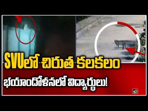 Leopard spotted at Sri Venkateswara University, creates panic