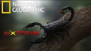 Nat Geo wild | The Most Extreme Venom | National Geographic Documentary