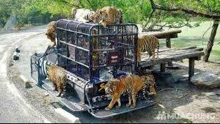 Vườn thú Safari World nổi tiếng thế giới - Safari World famous Zoo