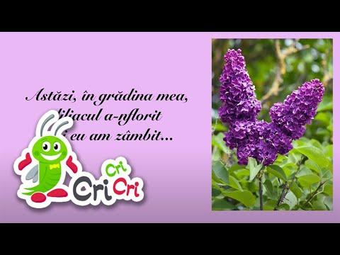 Cântece pentru copii - Flori de primavara