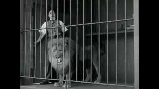 Lion Vs Charlie Chaplin (All About Entertainment - Facebook)
