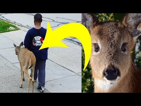 Neighbors Noticed That This Boy Walked A Deer Every Day. Then They Looked At The Animal's Eyes