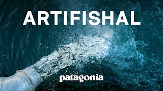 Artifishal (Full Film) | The Fight to Save Wild Salmon