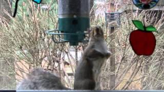 Yankee Flipper vs One Determined Squirrel