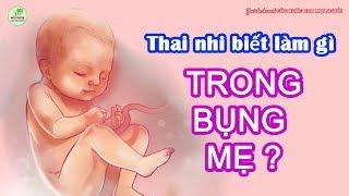Thai nhi làm gì trong bụng mẹ? - Những hành động đáng yêu của bé khi trong bụng bầu