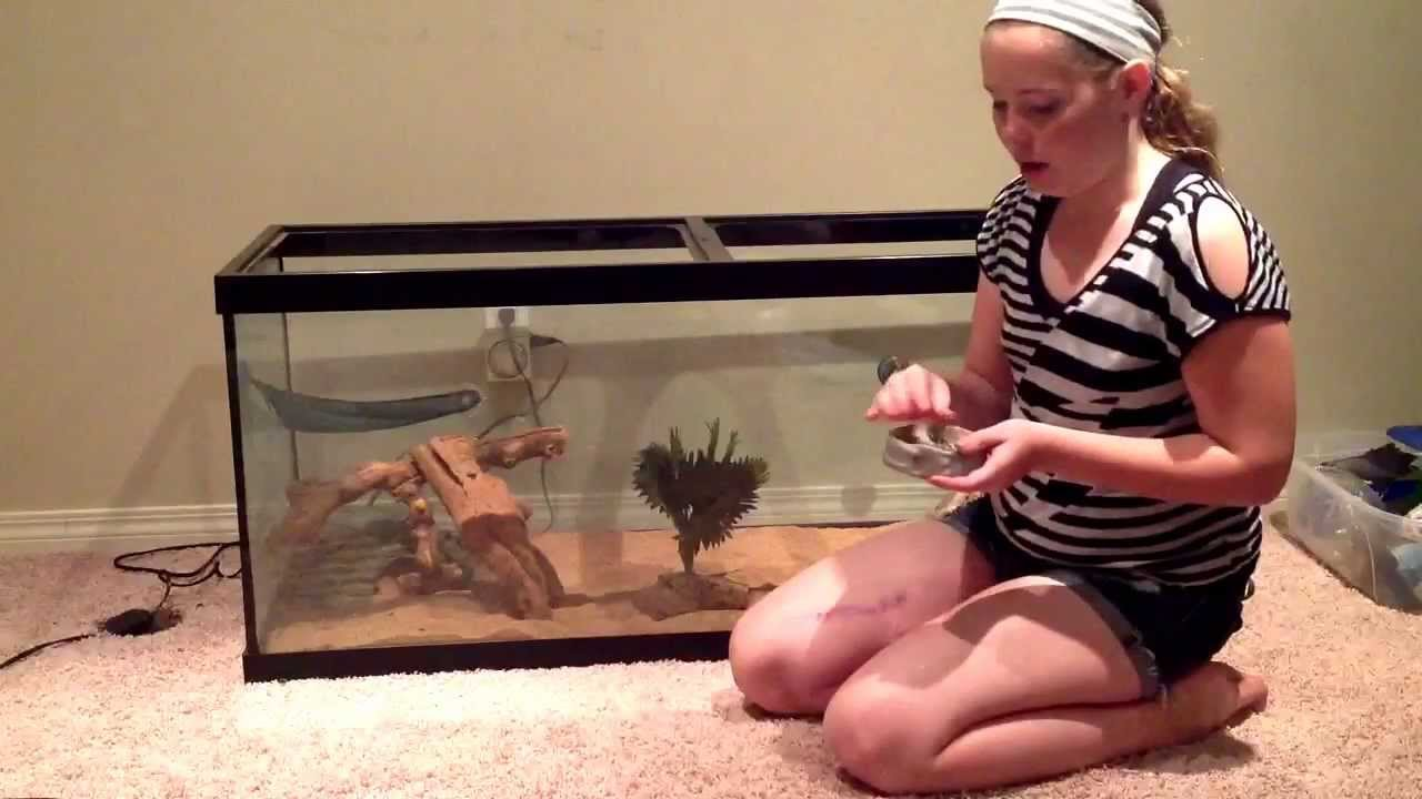 How To Set Up A Bearded Dragon Tank Youtube