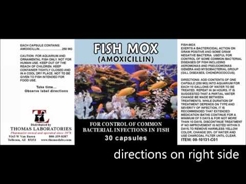 Shtf antibiotics for fighting bacterial infections 1080p for Fish mox for humans side effects