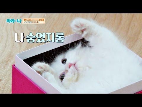 먼지의 초현실적인 귀여움 발산♡ 굿모닝 선물 '아빠 미소'  마리와 나 16회