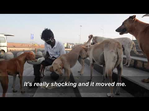 Animal lovers feed Chennai's hungry strays | AFP photo