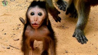 It''s so cutest new baby Timo scream near mom Tima | Adorable new baby Timo feel angry |
