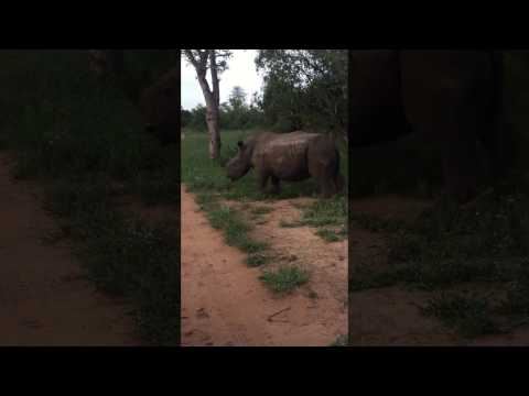 A Joyful Rhino Sighting in South Africa