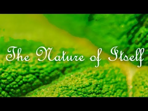 The Nature of Itself - Trailer