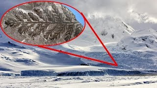 280 MILLION Year Old FOREST Discovered In Antarctica