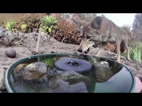 Camera Captures All Walks Of Life Drinking From Water Fountain