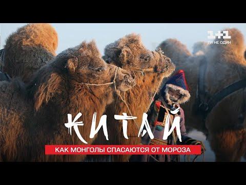 Прогулка на верблюдах и как монголы спасаются от мороза. Китай. Мир наизнанку 11 сезон 26 серия