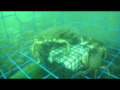 Crabbing sooke bc rotary pier