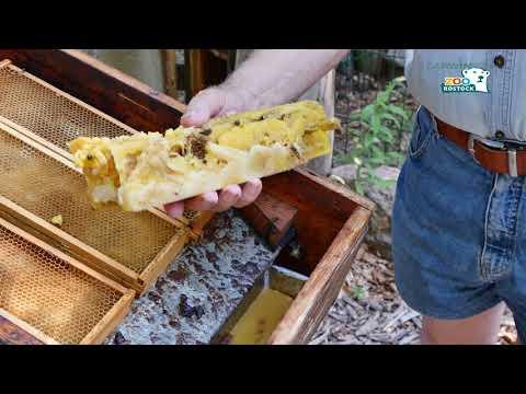 Zoo Rostock | Teil 3: Die verschiedenen Bienen-Produkte