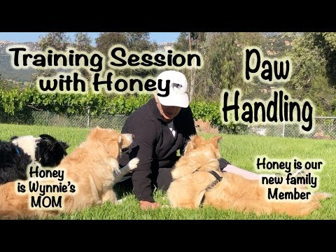 Handling with Honey