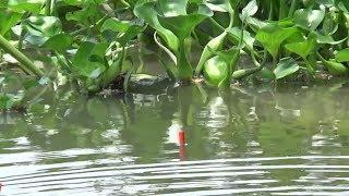 câu cá những điểm này lên cá chỉ gãy lưỡi và cong cần.