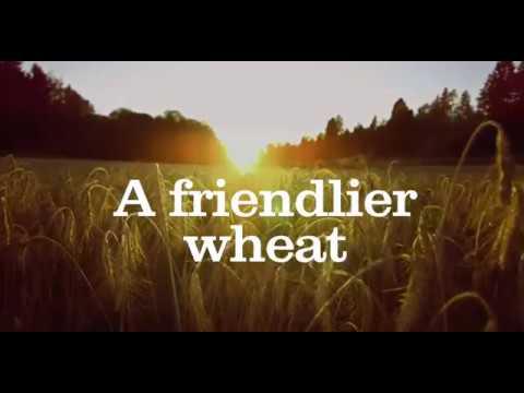 A Friendlier Wheat