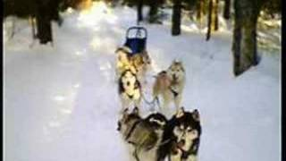 Autre video de mushing