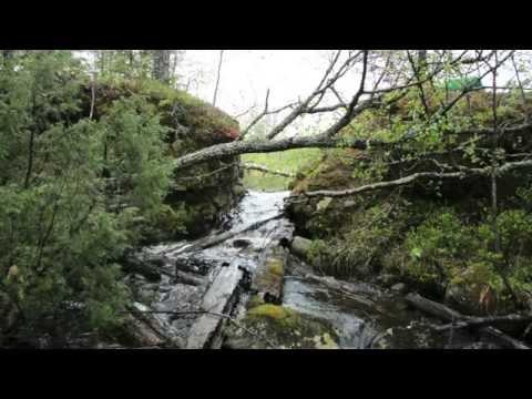 Dammutrivning ReMiBar 2014