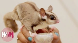 Top 10 Weirdly Cute Pets You Should Own