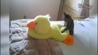 kids vs animals Prepare To Laugh - Funny Cats, But Like Nothing You've Ever Seen Before