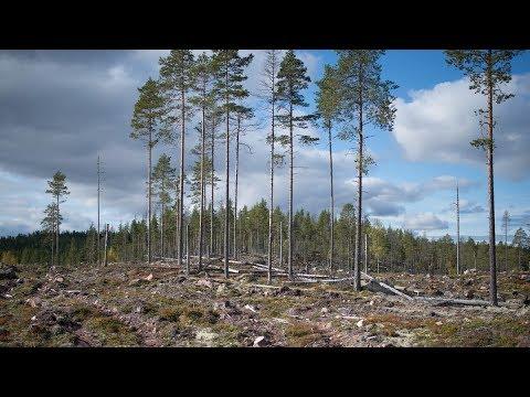 360-film: Demonstration av olika hänsynsnivåer vid avverkning