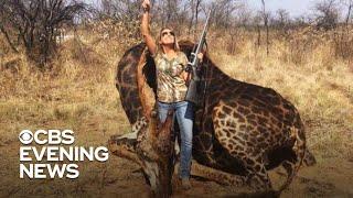 Trophy hunter defends controversial photo of slain giraffe