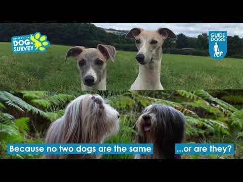 Great British Dog Survey 2018 | Accessible Version