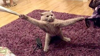Wanna LAUGH HARD right NOW? - Watch these EXTREMELY FUNNY ANIMAL VIDEOS
