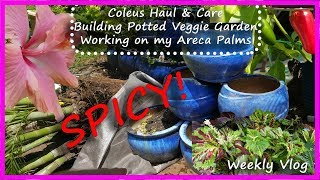 Coleus Haul || Potted Pepper Plant Vegetable Garden || Areca Palms