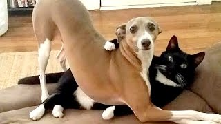 After this YOU'll WISH TO HAVE A DOG - Funny DOG compilation