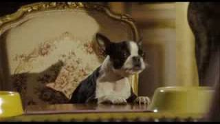 Palace pour chiens :  bande-annonce VF