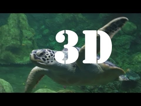 Turtle Reef (3D) at SeaWorld San Diego