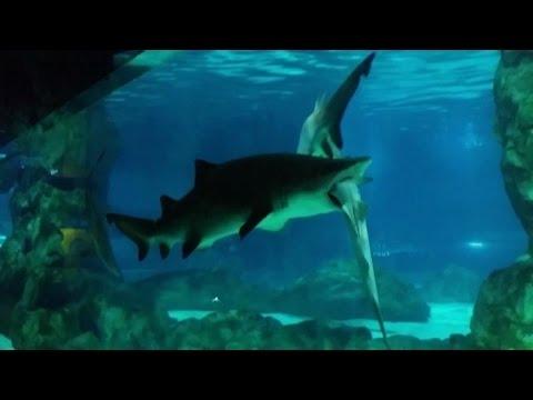 10 pesci da acquario pi aggressivi in assoluto musica for Pesci da laghetto mangia zanzare